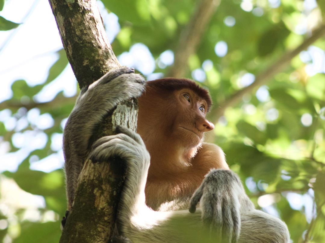 Photo: A monkey in a tree
